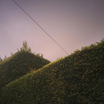overlapping_shrubs_01b_2014