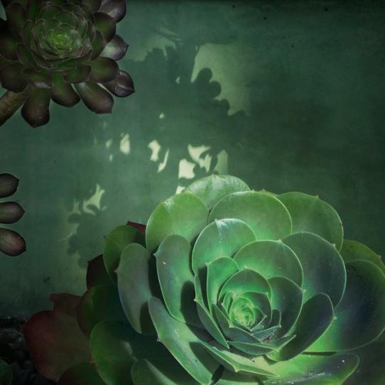 succulent_01_2014