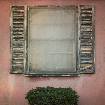 window_shrub_01_2015